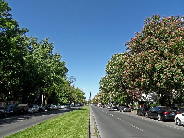 Breite, menschenleere Straße mit blühenden Kastanienbäumen unter blauem Himmel