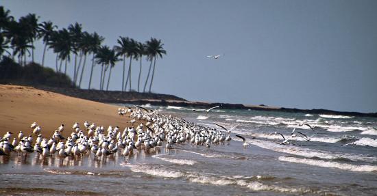 unique beaches