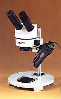 5 osservare come: stereomicroscopio 4