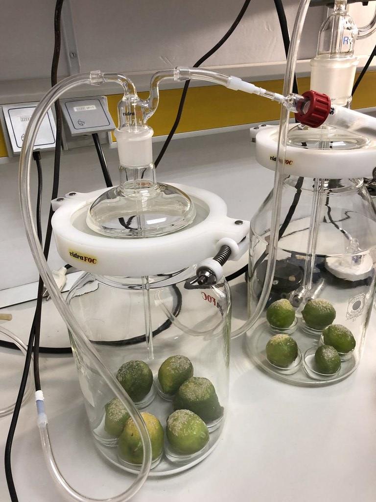 科學家從植物萃取出費洛蒙,放入誘集裝置或配液器,阻止害蟲交配。圖片來源:Earlham Institute