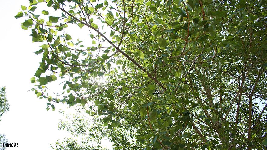 naturaleza en benaguacil