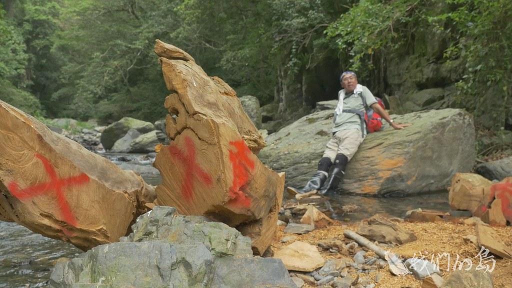大樹原本守護著山坡水土,被切塊帶離森林後,環境代價難以估計。