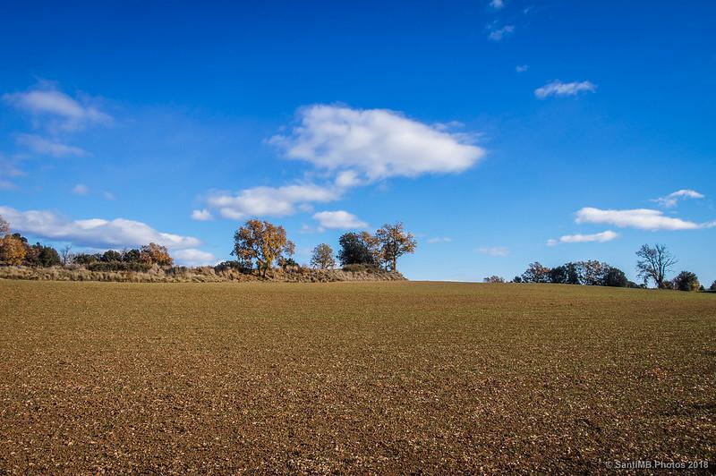 Campos de cereal en el camino al Camping Serrat Roig de Avià