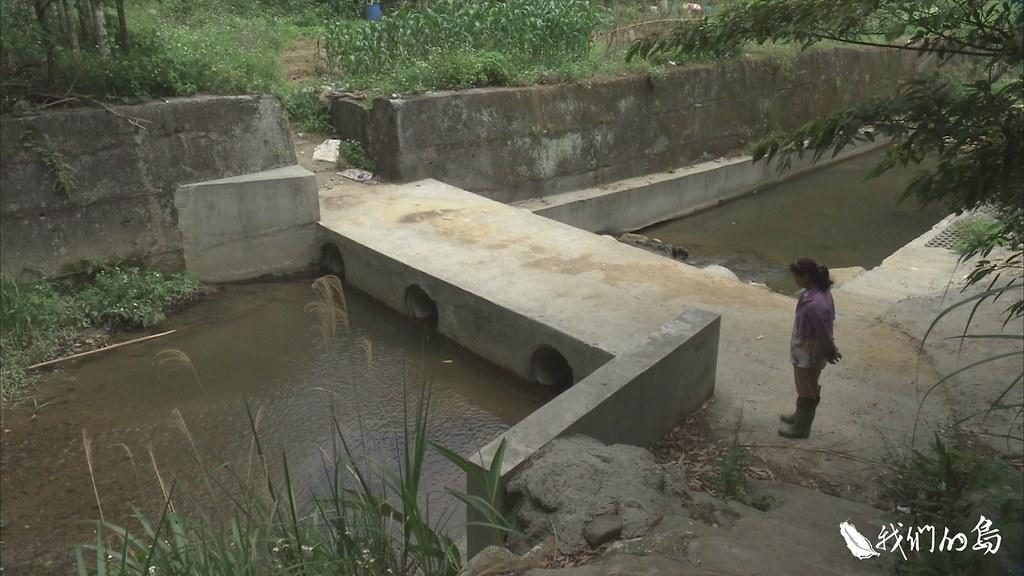 今年三月,水利會沿著新竹關西四寮溪小徑開挖,工程施作在脆弱的生態環境,引發危機。