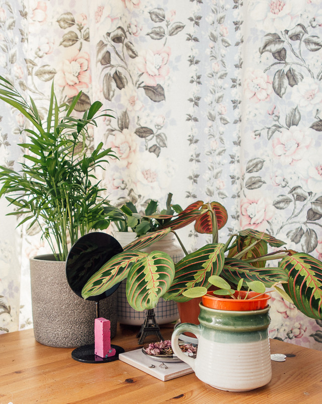 parlour palm, christmas cactus, maranta and pilea
