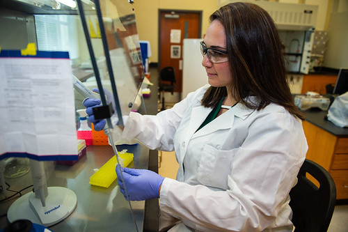 Assistant Professor Sarah Zohdy works in her lab