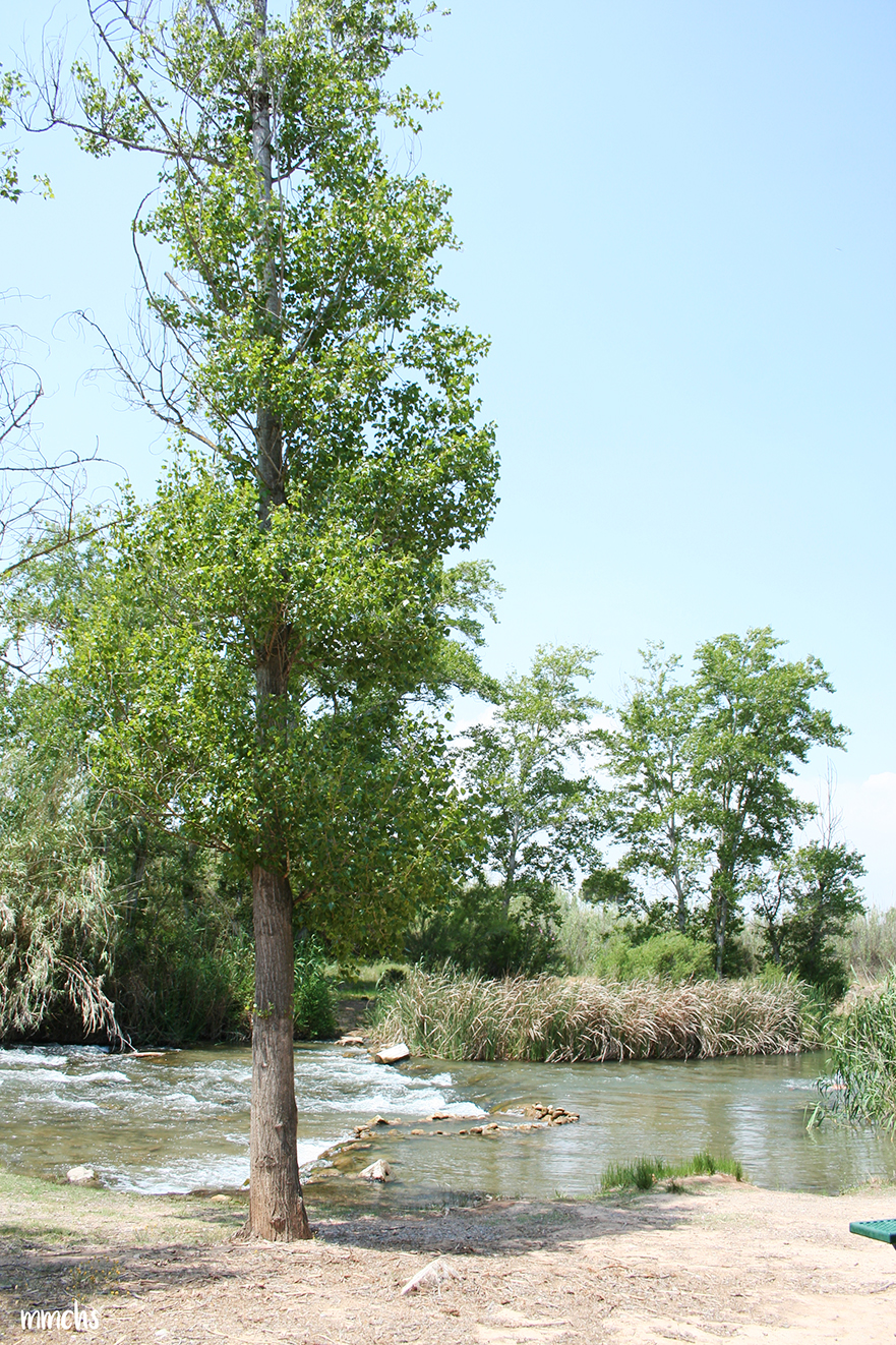 rio turia
