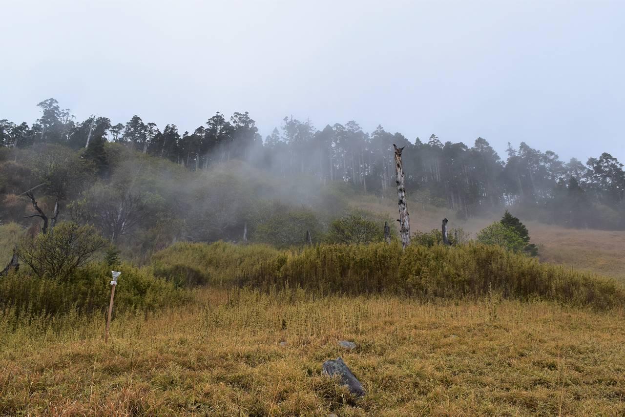 台湾・雪山 草原と枯れ木