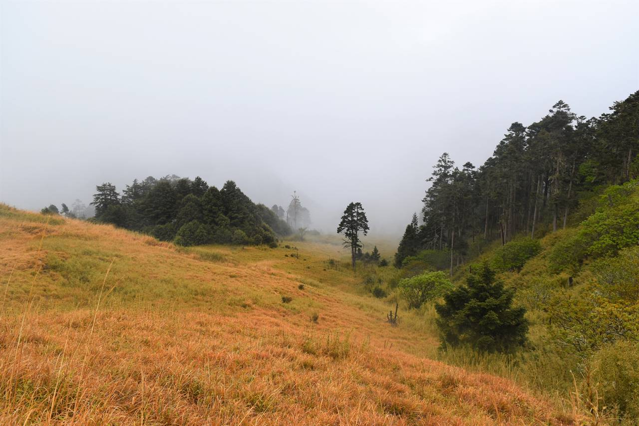 台湾・雪山 草紅葉