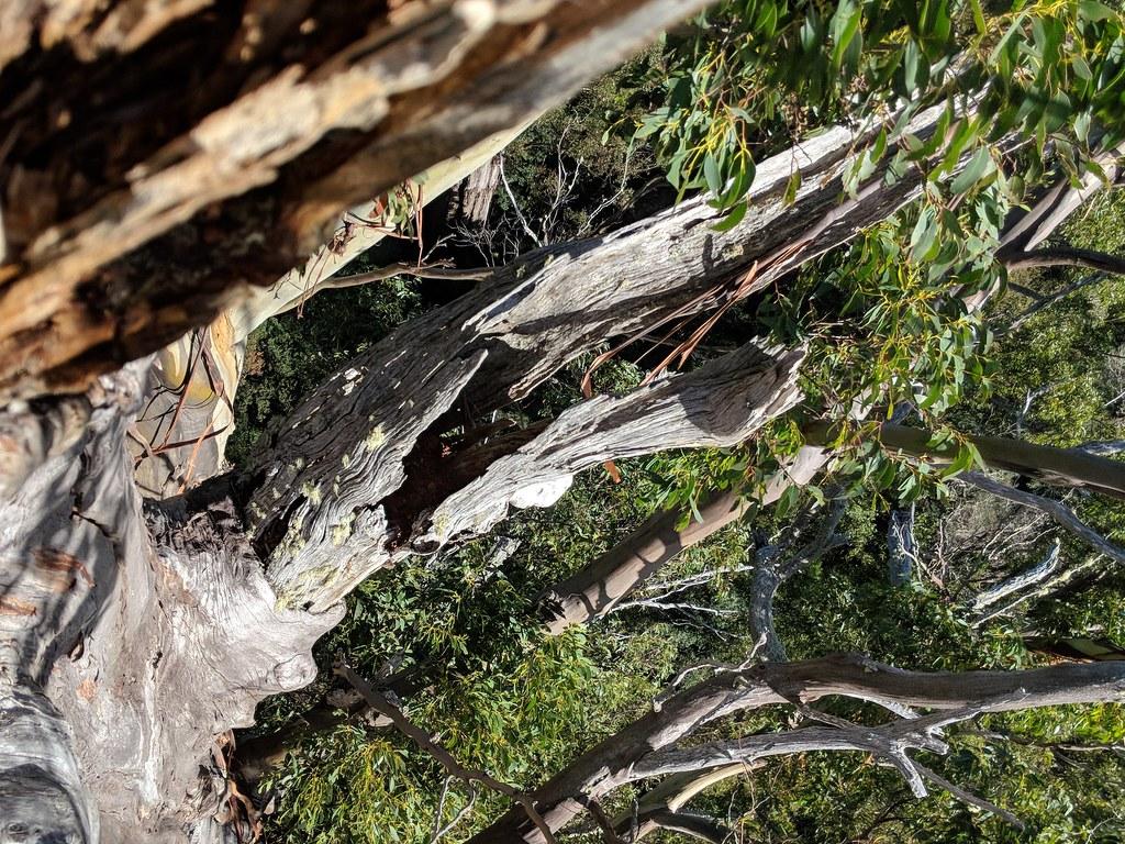 腐朽的樹木,若留在森林裡可成為許多生物的棲地