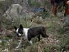 Lewis, le chien de Martine, en recherche d'ombre