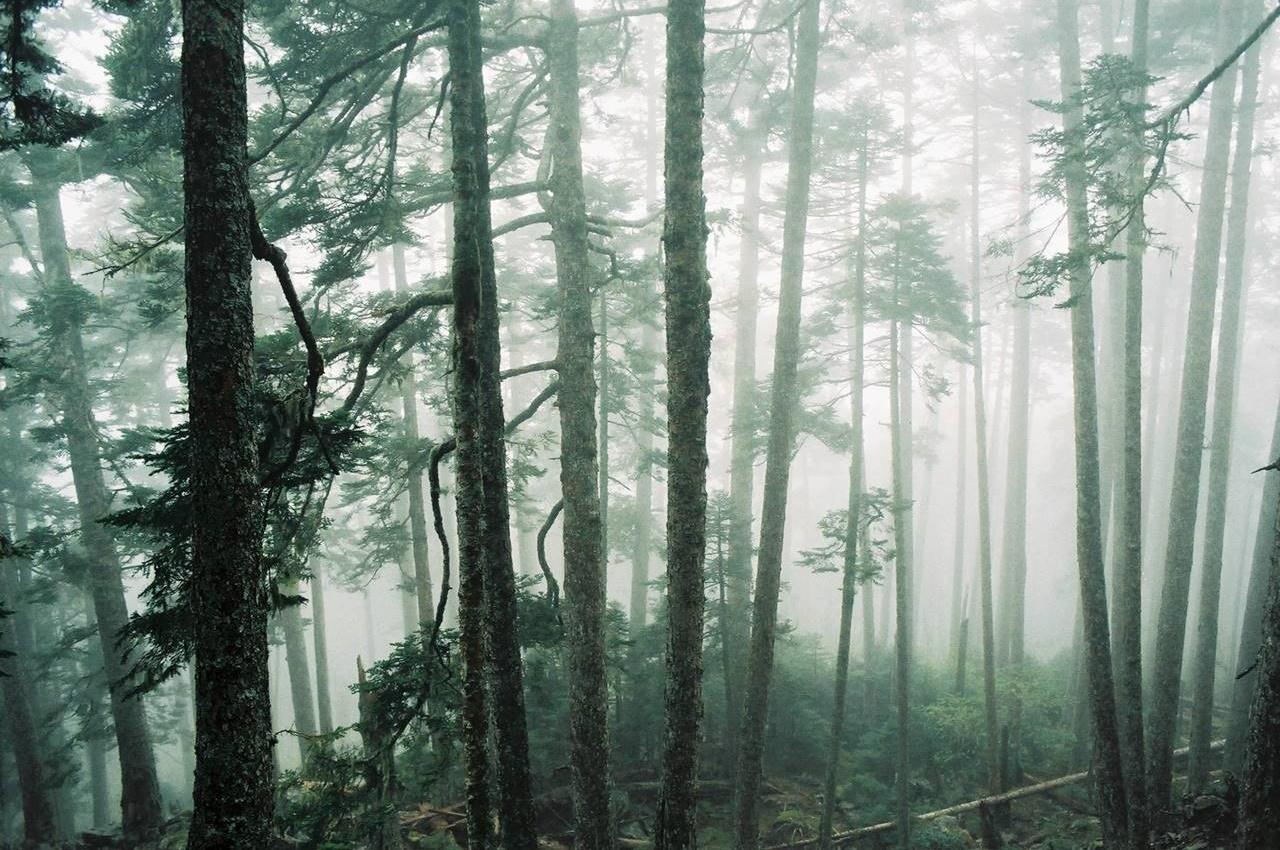 台湾・雪山 幻想的な森