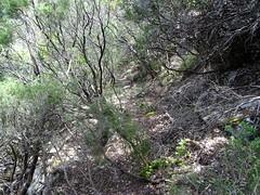 Vue de la partie du Chemin RD du Finicione exploré : partie la plus végétale vers Quarciteddu