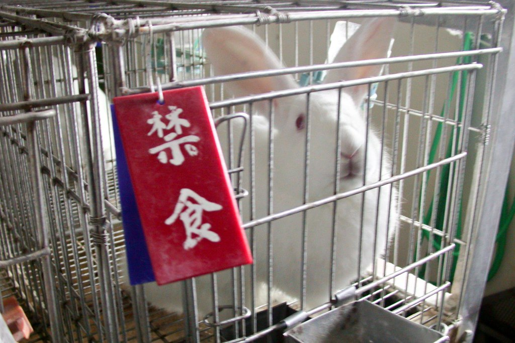 鼠、兔、貓狗等動物都是常見的活體動物實驗對象,減少或廢除活體動物實驗除了人道爭議,也是各國生醫產業未來重要發展方向。