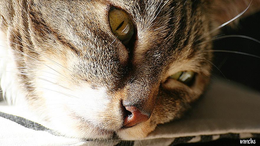 Detalles pelo de gato objetivo Sigma 300 mm