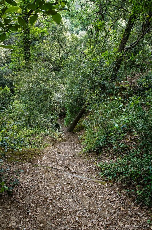 Bajando hacia la Font de Can Güell