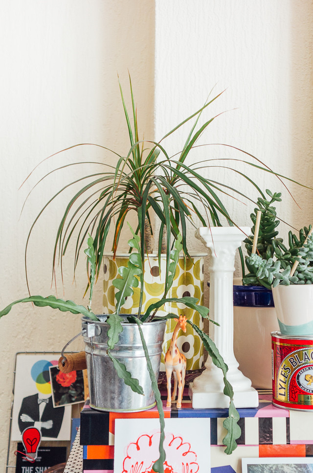dracaena and other plants