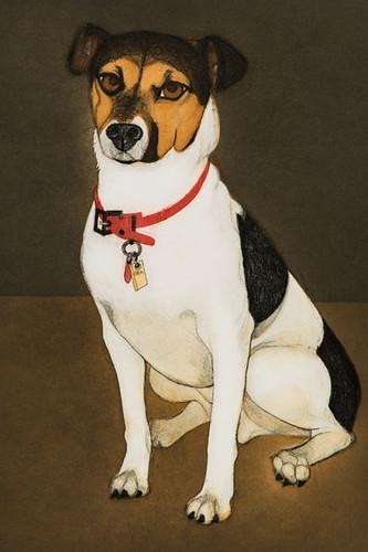 A print of a dog.