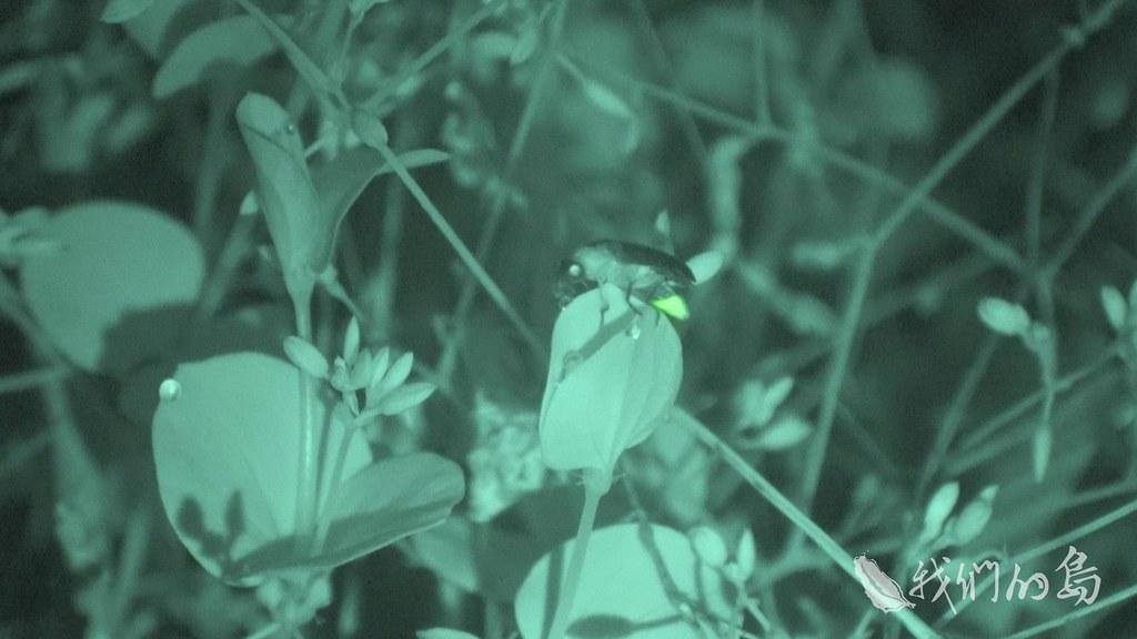 958-2-38s何健鎔認為,賞螢經濟是附加價值,棲地保育才是目的。