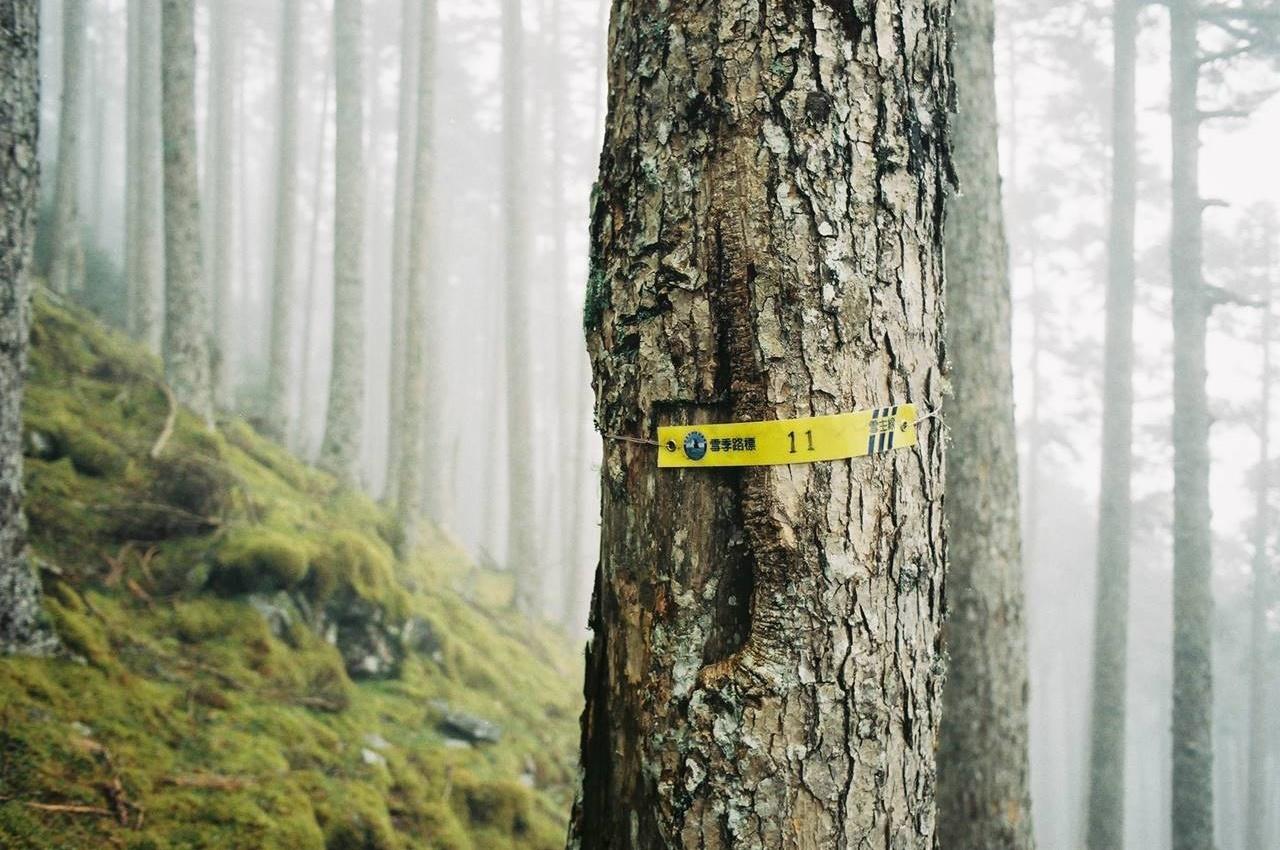 台湾・雪山 樹林帯の標識
