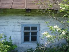 Вікна заросли кущами