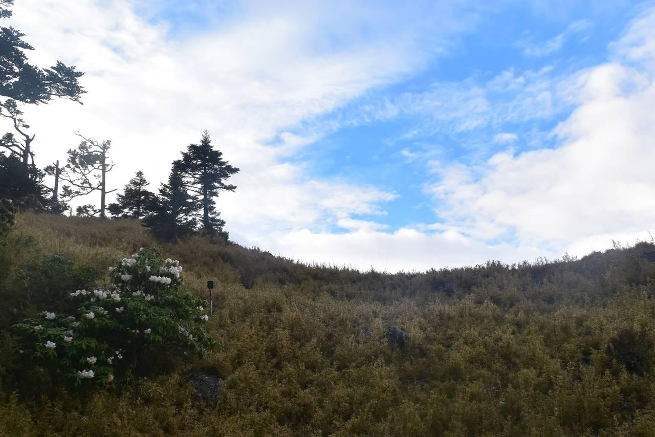 台湾・雪山 青空とシャクナゲ