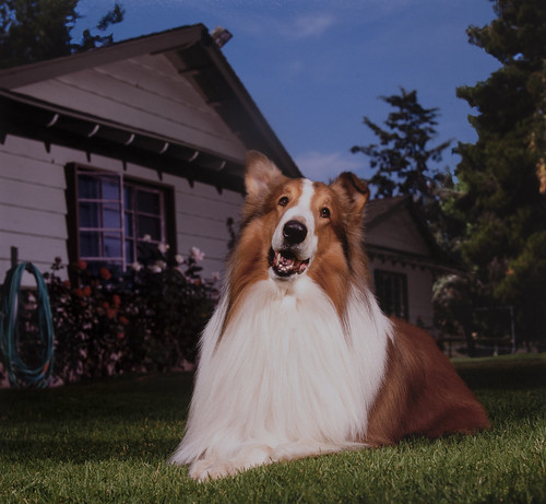 A photograph of a dog.