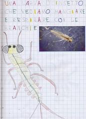 9 dis_vero  8 larva efemerottero