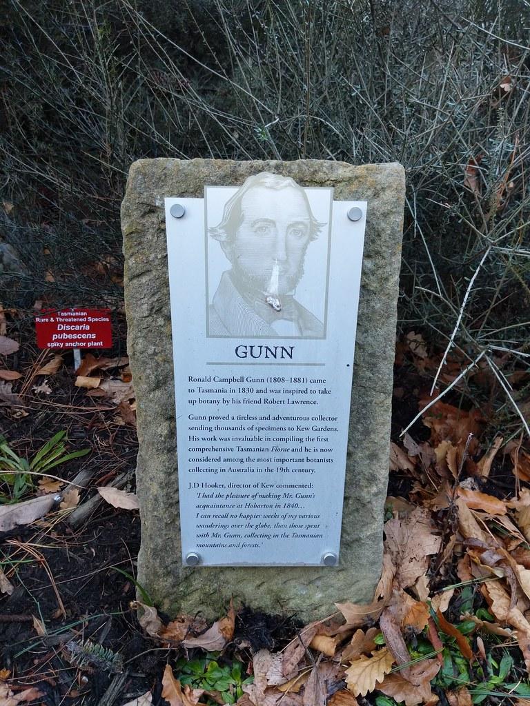 貢斯木業是塔島最早的植物學家Gunn的後代所創