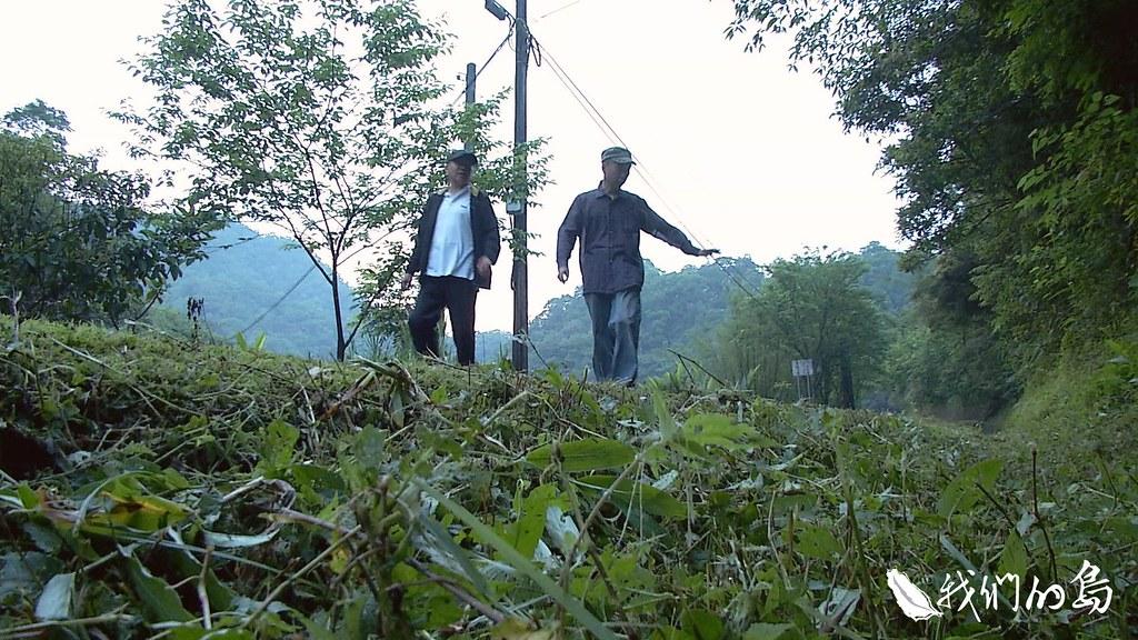 958-2-29黃緣螢野外族群,因為人類頻繁使用農藥或除草劑,已經相當稀少。