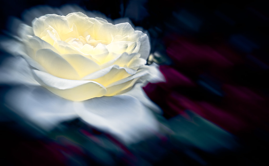 Abstract yellow rose