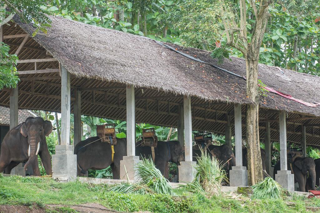True Bali Experience (Elephant Ride)