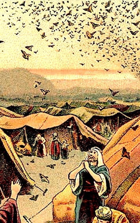 Утоление голода в пустыне Син.