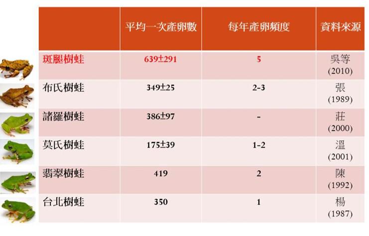 斑腿樹蛙與五種台灣特有種綠色樹蛙平均產卵數與產卵頻度比較。圖表提供:楊懿如