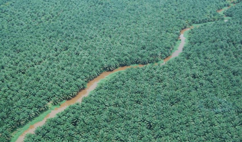 Hutan/KOCP/IUCN