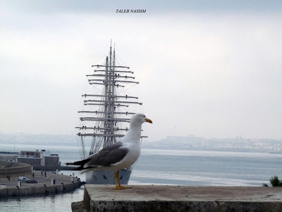 صور السفينة الشراعية الجزائرية  [ الملاح 938 ] - صفحة 11 41369757240_e49de10f0c_o