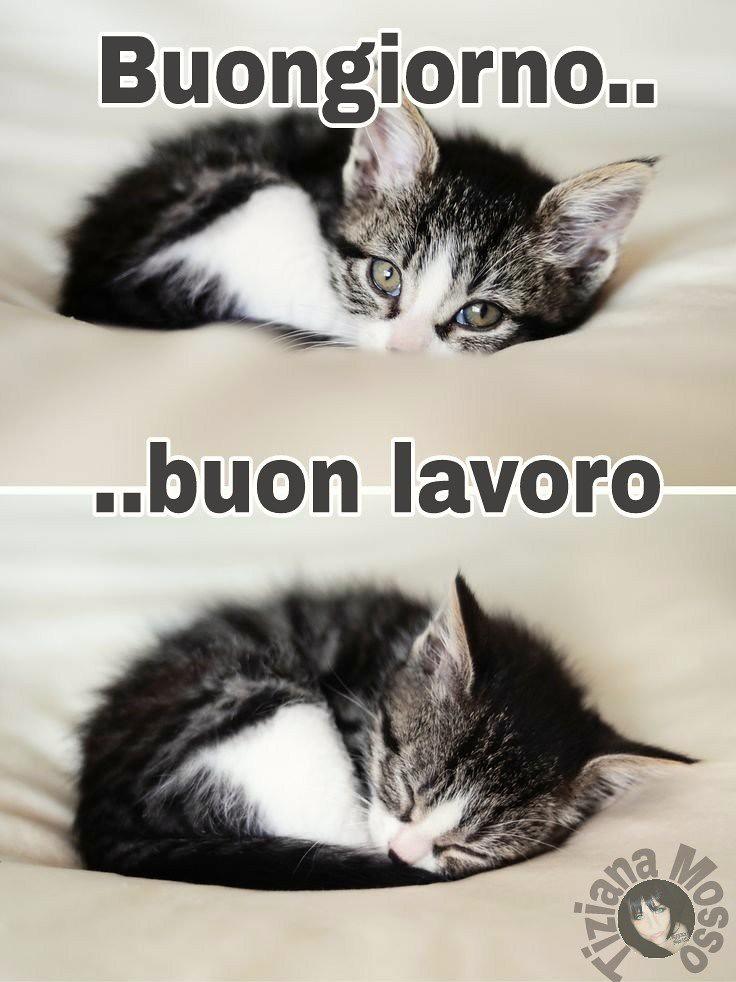 Link divertenti buongiorno buona giornata love cat for Immagini divertenti buona giornata