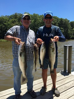 Photo of men holding their catch of striped bass
