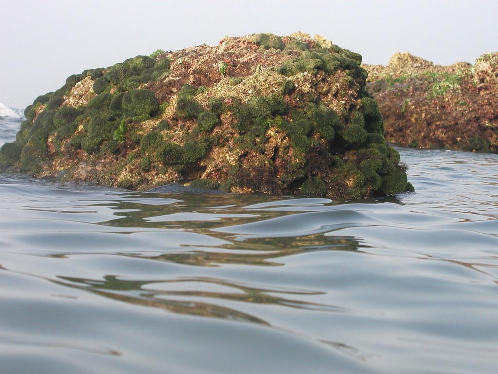 被各種藻類覆蓋的礁石