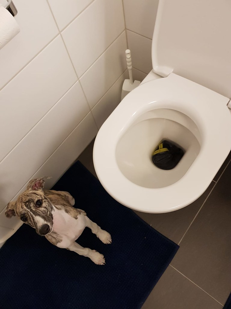 Was??? Die Schmutzwäsche gehört nicht ins WC sondern in die Waschmaschine? Das hat mir noch niemand erklärt, da will ich helfen und dann...