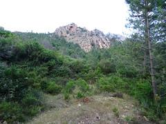 A l'embranchement de la 1ère piste annexe (ancien chemin de Paliri ?) sur la piste de la Figa Bona : la pointe 441