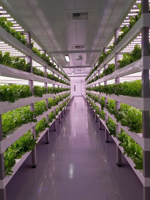 Indoor vertical farming