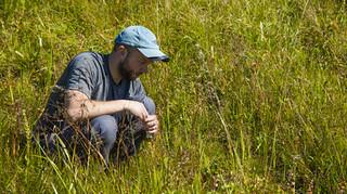 野花用多樣性對抗氣候變遷。圖片來源:Josh Puzey