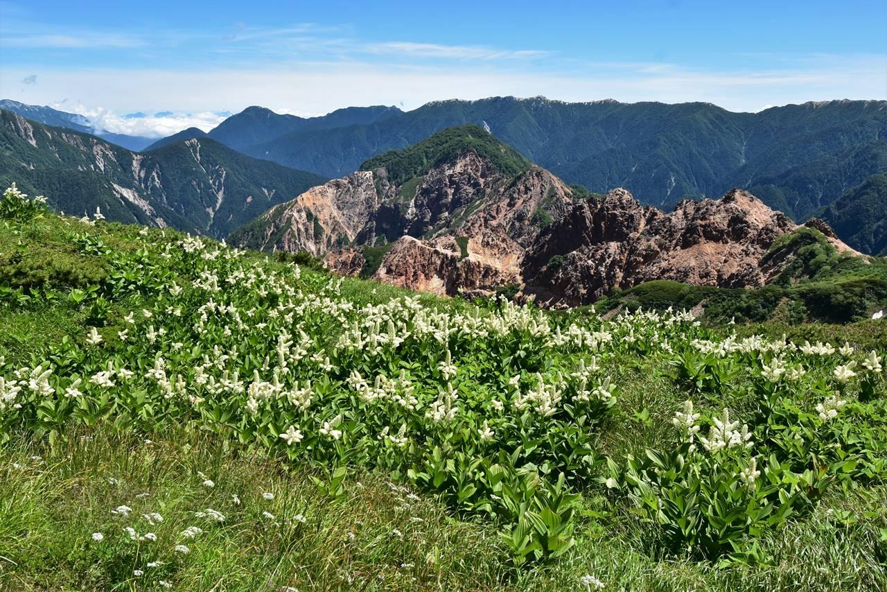 北アルプス・硫黄岳とコバイケイソウ