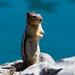Chipmunk at Lake Minnewanka, Banff National Park