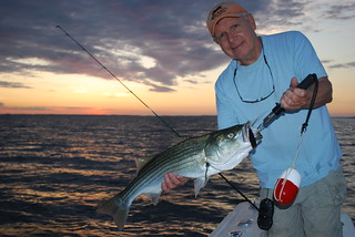 Man holding striped bass