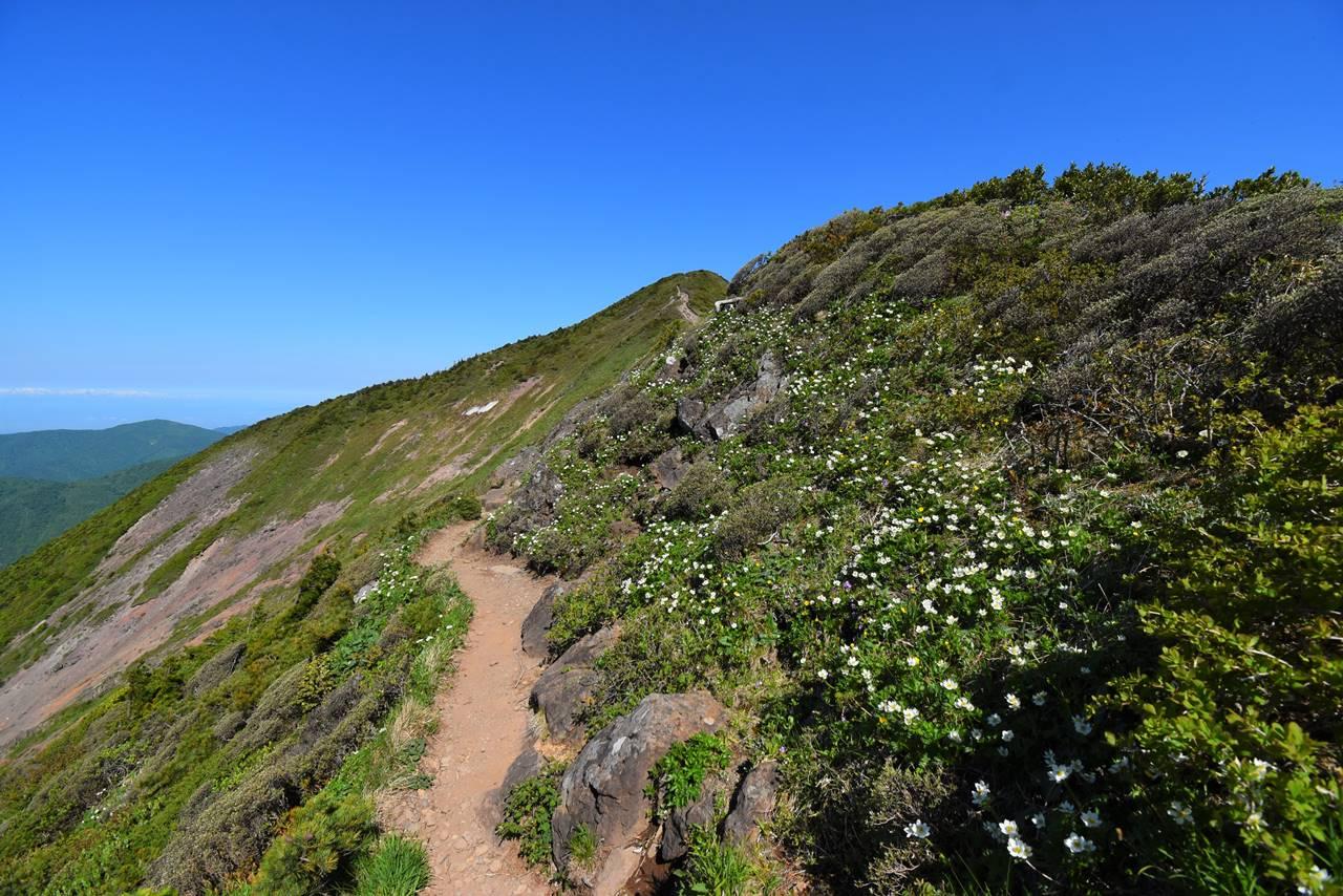 不忘山登山 稜線のお花畑