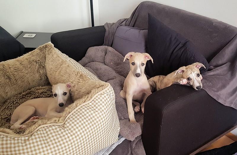 Dürfen wir auch hier bleiben???