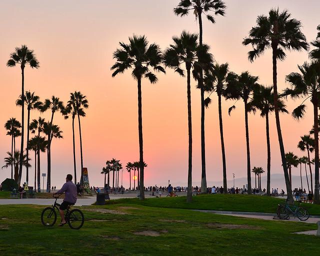 Palmeras de Venice Beach Park, junto al Oceans Drive