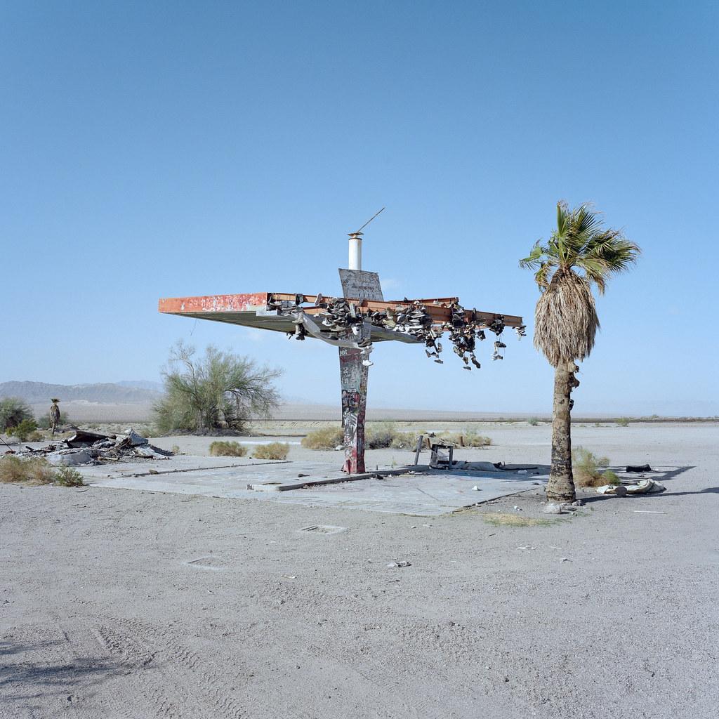 Mojave Desert Native Plants: The Shoe Tree. Mojave Desert, Ca. 2018.